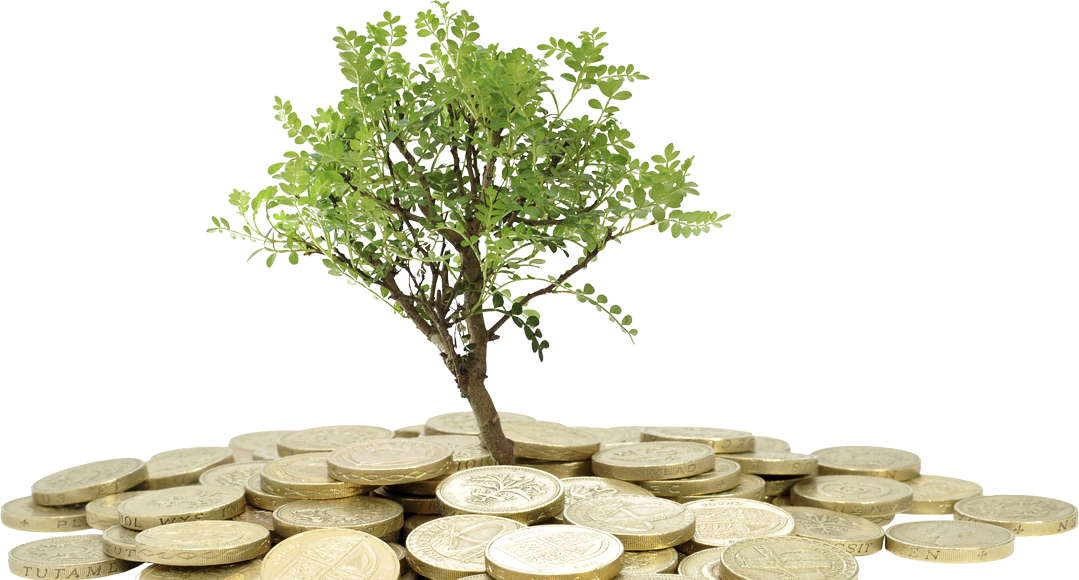 Savings and Investments Money Tree Image